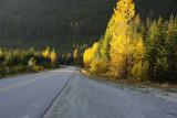 Autumn on a B.C. Hi-Way