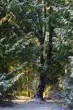 Forest giant.jpg