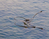 Rope Seaweed Bow