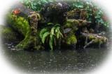 Fern liking the rain