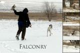 Falconry 2006