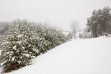 White Christmas 2010.jpg