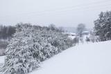 Snow_1_10_11b.jpg