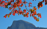 Dogwood Leaves Over Half Dome