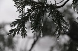Frozen Drops of Mist