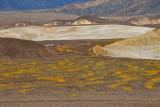 Field of Flowers Near Mustard Canyon