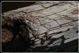 Driftwood, McClure Bech