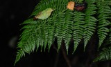 Fern and Leaves - Clem Miller Education Center