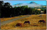 Pastoral Scene in the Mountains Above San Simeon