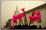 Naked Ladies at St. Teresa's Church!