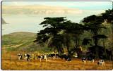 Point Reyes Ranch #2