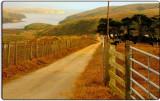 Point Reyes Ranch #3