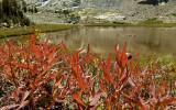 Plants and a tarn above Big McGee Lake.