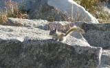 A chipmunk surveys its kingdom.