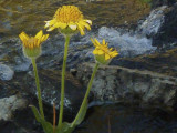 Flowers near camp.