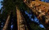 Mountain Home - Photography Amongst the Giant Sequoias