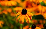 Flowers at Brookgreen Gardens