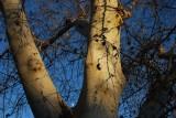 Moonrise, Winter - Chico, California