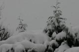 2009 Snow