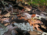 Sandstone and Lichens