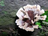 Fiber Vase Fungus ??