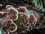 Fungi Stairs