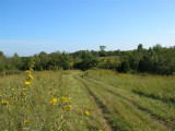 Long Fields