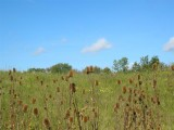Fields of Teasel