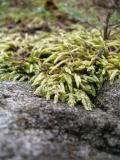 Moss Slide