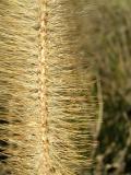 Grass - Off Center