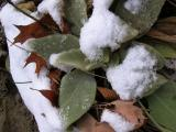 Mullein and Snow