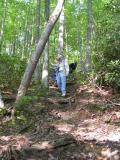 Descending to the Laurel Branch Trail