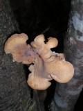 Fractal Fungi