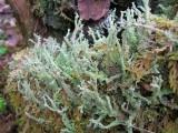Interesting Moss