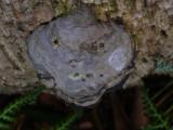 Evil Looking Fungi