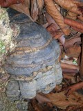 Interesting Fungi