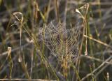 Cold cobweb on a frosty morning