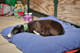 Maggie trying out Paddys cushion. 12.jpg