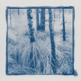 Blue Forest Cyanotypes
