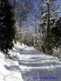 The Avenue In Winter