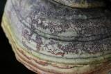 Hoof Fungus Detail