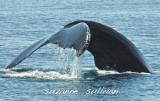 newburyport_whalewatch_09