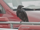 raven DeMoulas parking lot Rowley