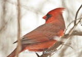 cardinal wilmingotn