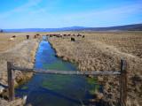 28, Ranch Landscape