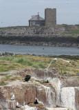 Inner Farne from Staple Island