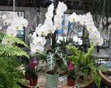 Flower Market, Place Louise Lepine