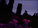 rose garden may 3, 2009