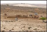 A camel parking lot