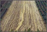 Fields of Deir Hana, Galilee Israel